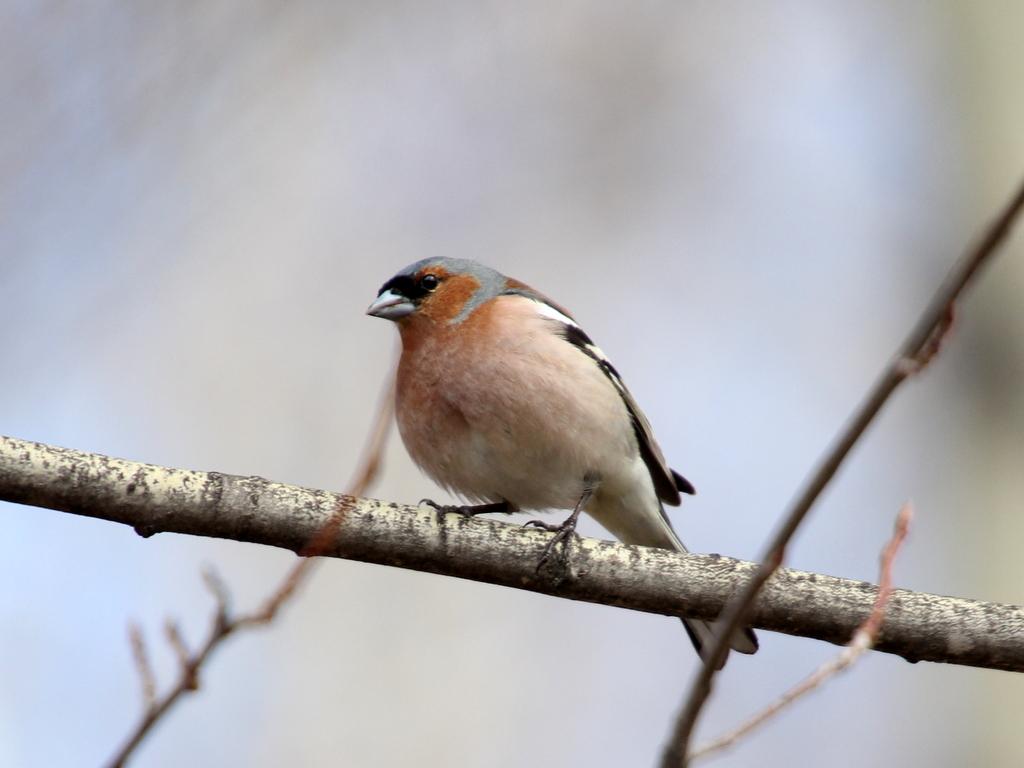 Фото птиц с названиями в томской области