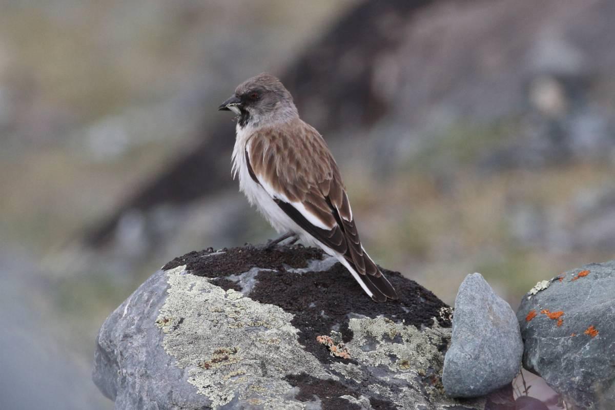 птицы горного алтая фото и названия светлый зал, доступные