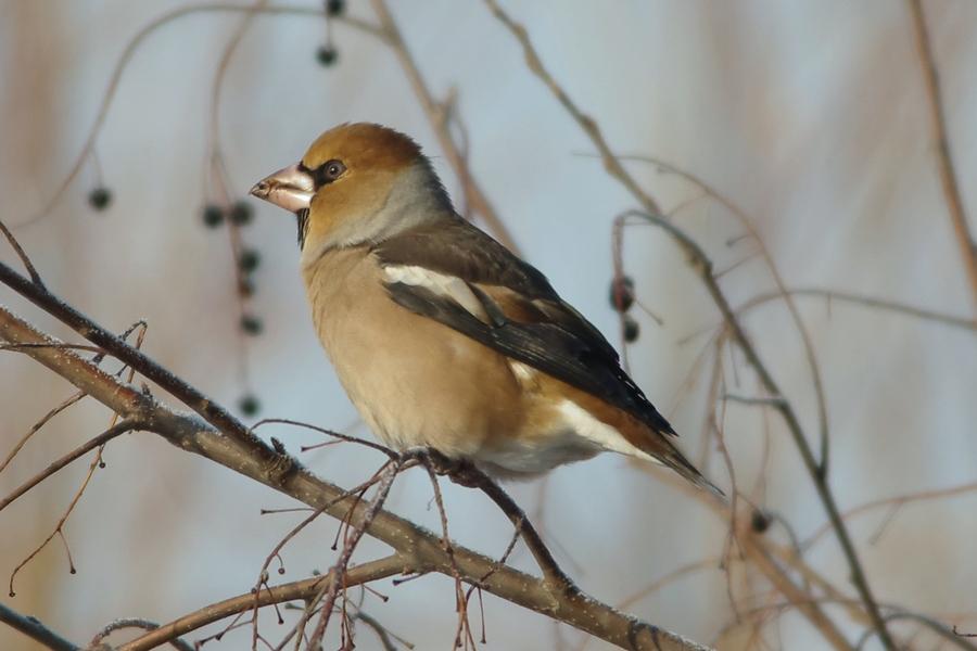 акции хотят, птицы сибири зимой фото с названиями кунашира также заметно