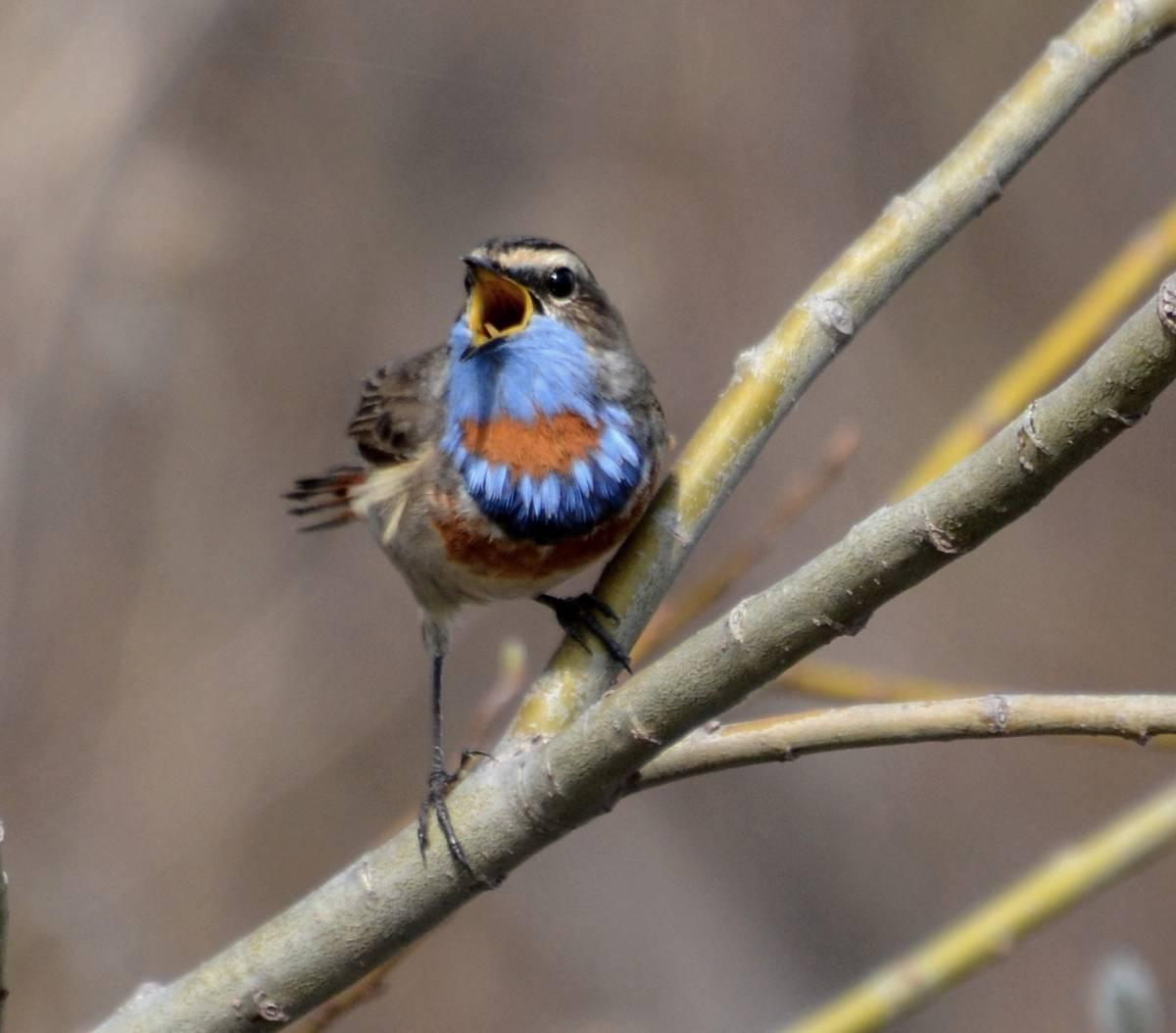 фото птиц с названиями в томской области нет желания постоянно