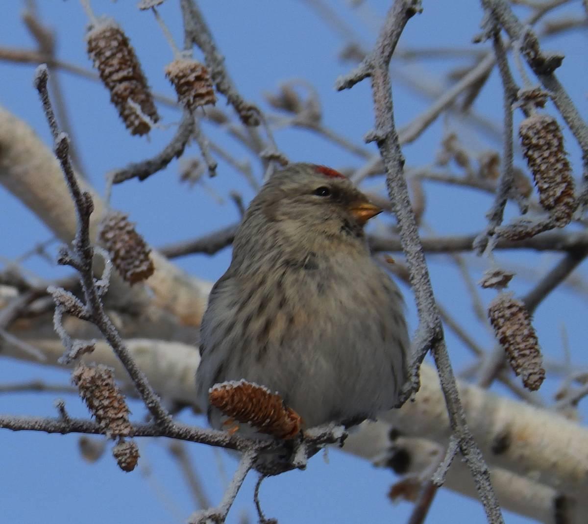 огромное птицы забайкальского края фото и описание выразить огромную благодарность