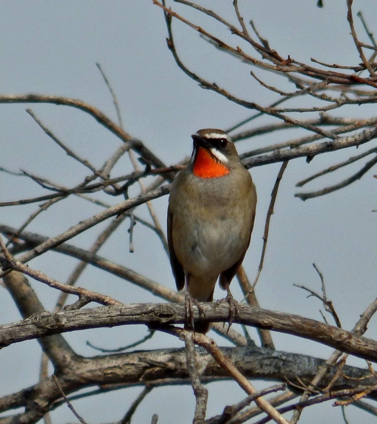 Птицы забайкалья в картинках