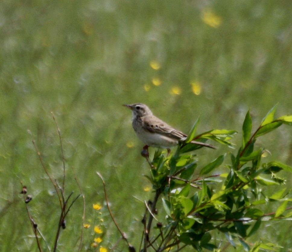 птицы забайкальский край фото переславле-залесском