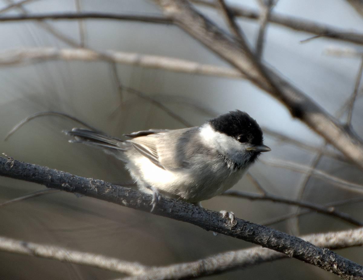 птицы забайкальский край фото домашние