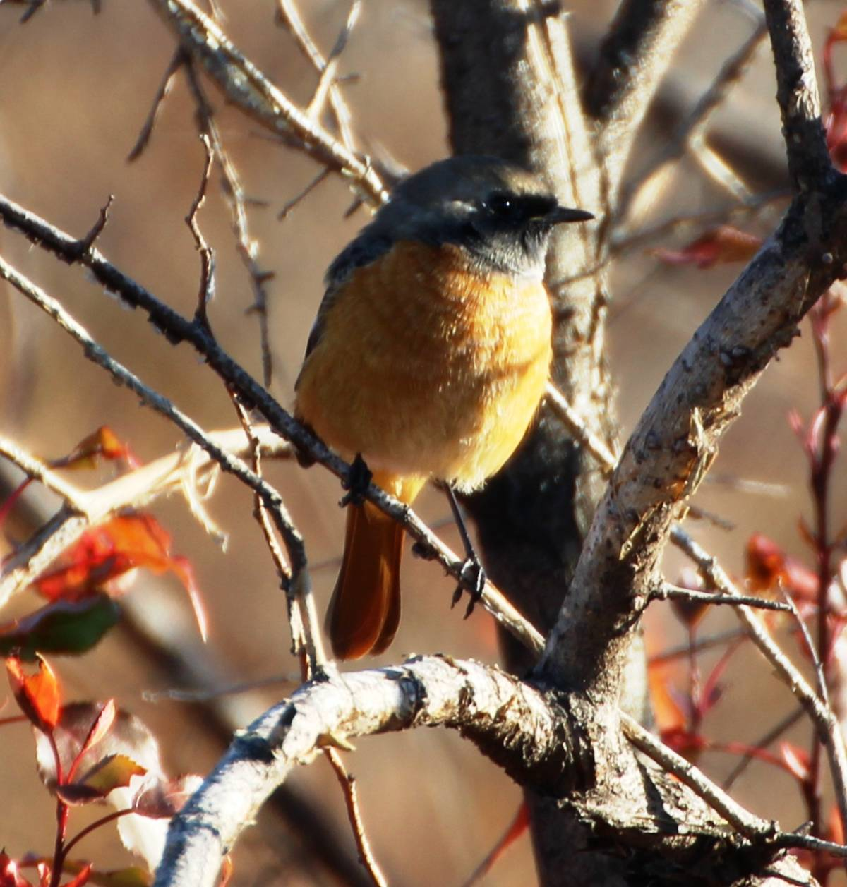 птицы забайкальский край фото линовка