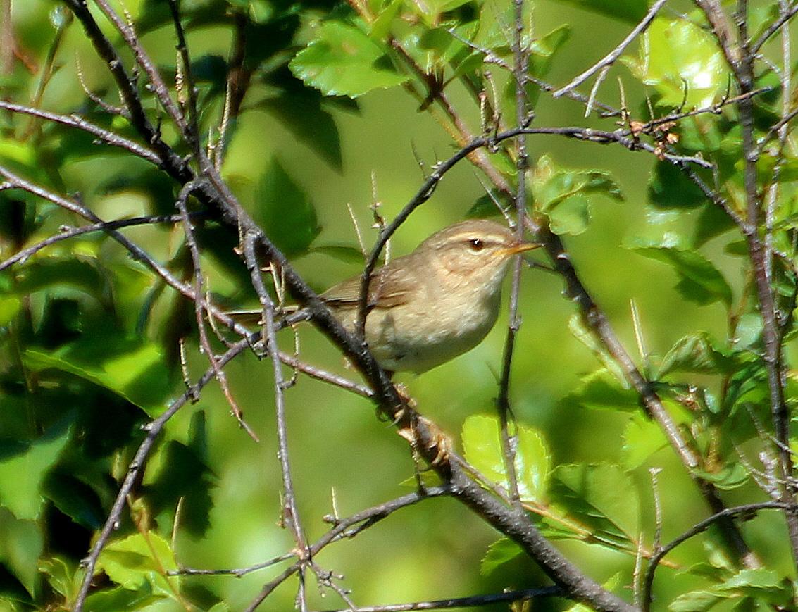 Птицы забайкальского края фото
