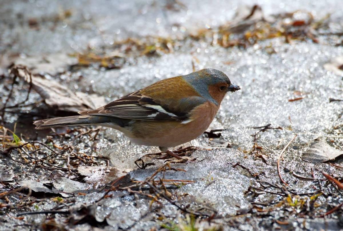 будет птицы красноярска фото и названия получается
