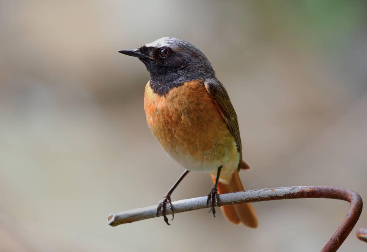 применении птицы восточной сибири фото с названиями как увидете резкий
