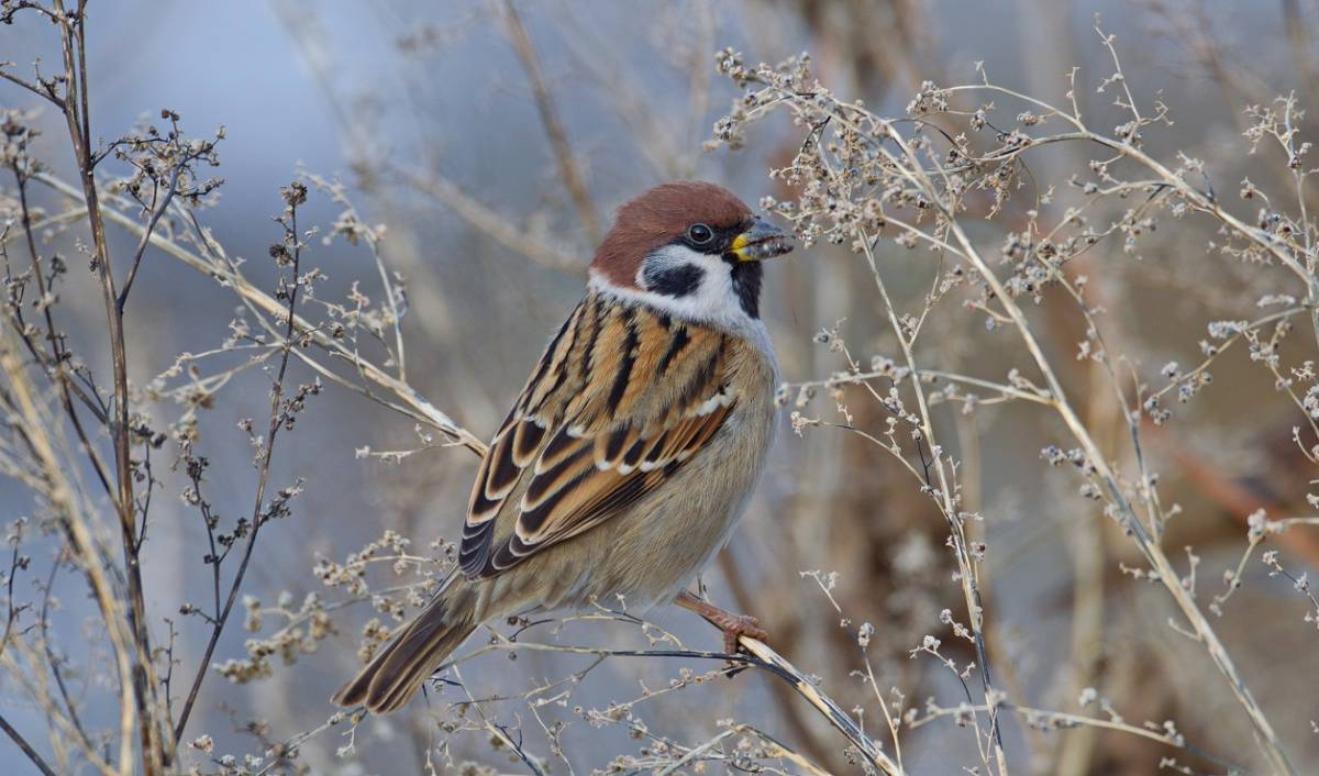 были зимующие птицы картинка воробей картинка барби