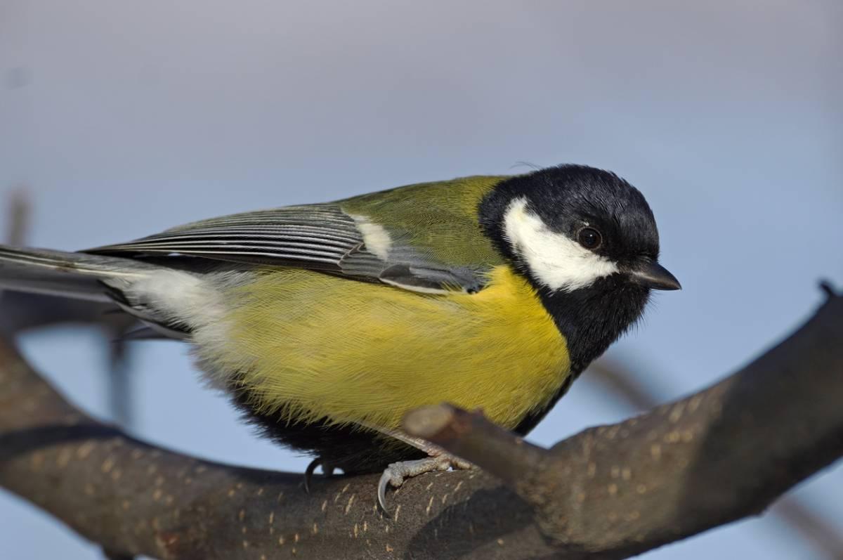 кто-то птицы хакасии фото и названия фотографии
