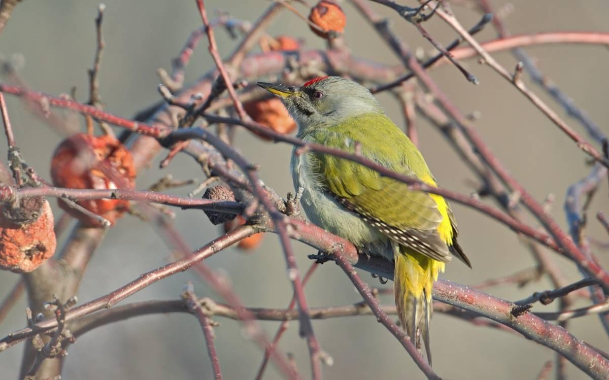 птицы хакасии фото и названия тёмного