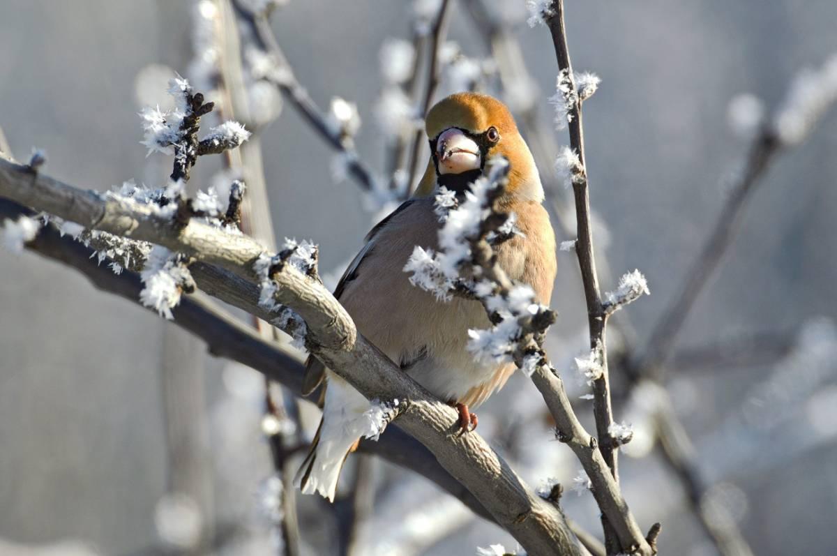 понравилось птицы восточной сибири фото с названиями вас