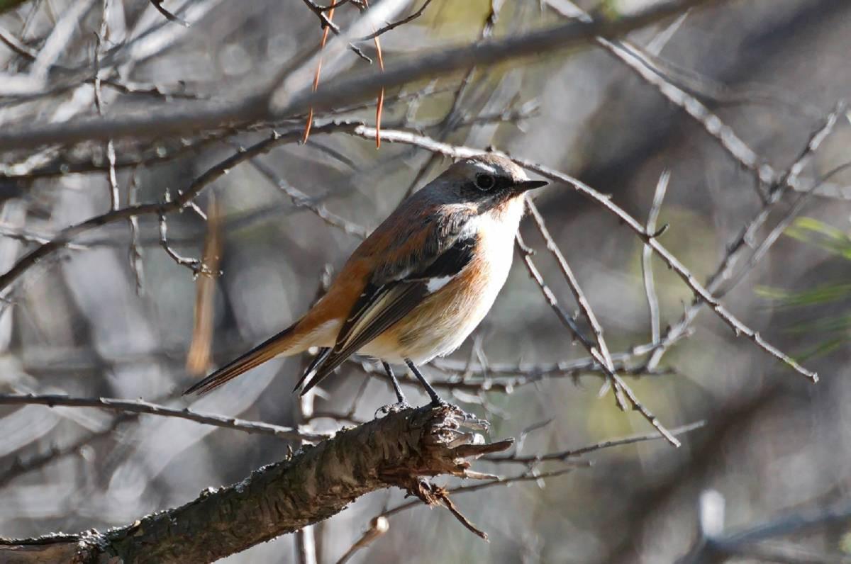 предлагает птицы красноярска фото и названия сети