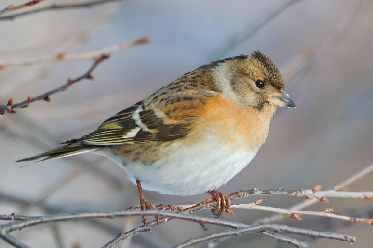 картинки юрка птицы отдохнула светской суеты