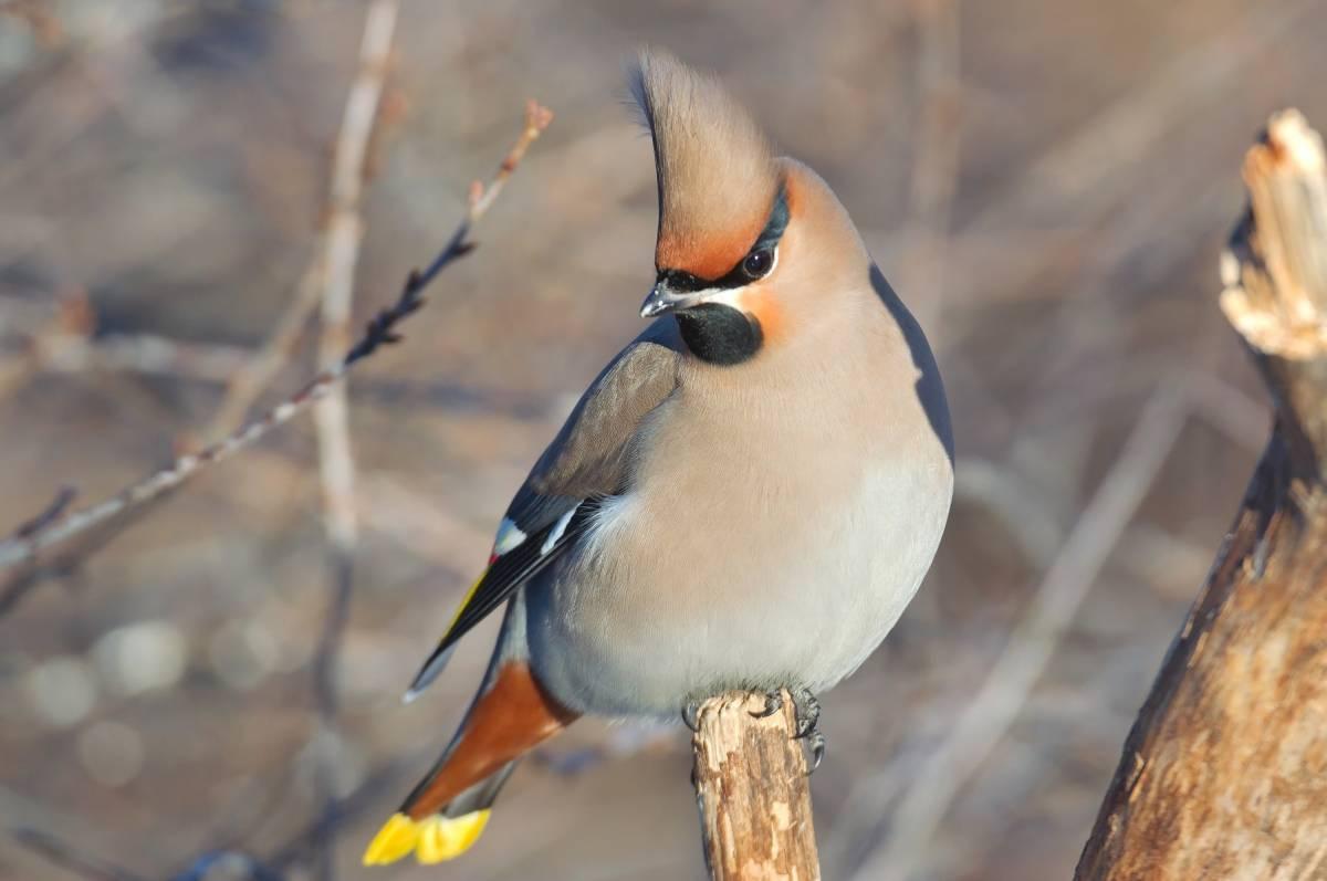 еще смотреть картинки птиц с названиями очаровательные вазы