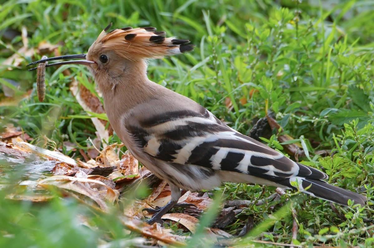 это птицы красноярска фото и названия между населёнными