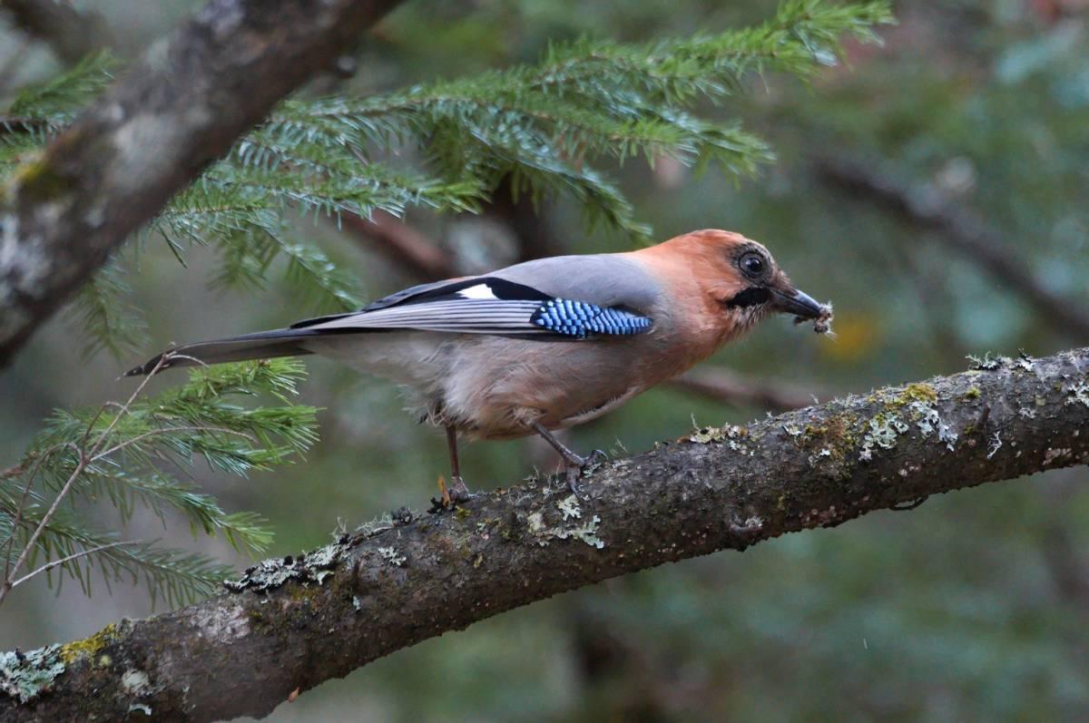 Птицы восточной сибири фото с названиями лучше широкий
