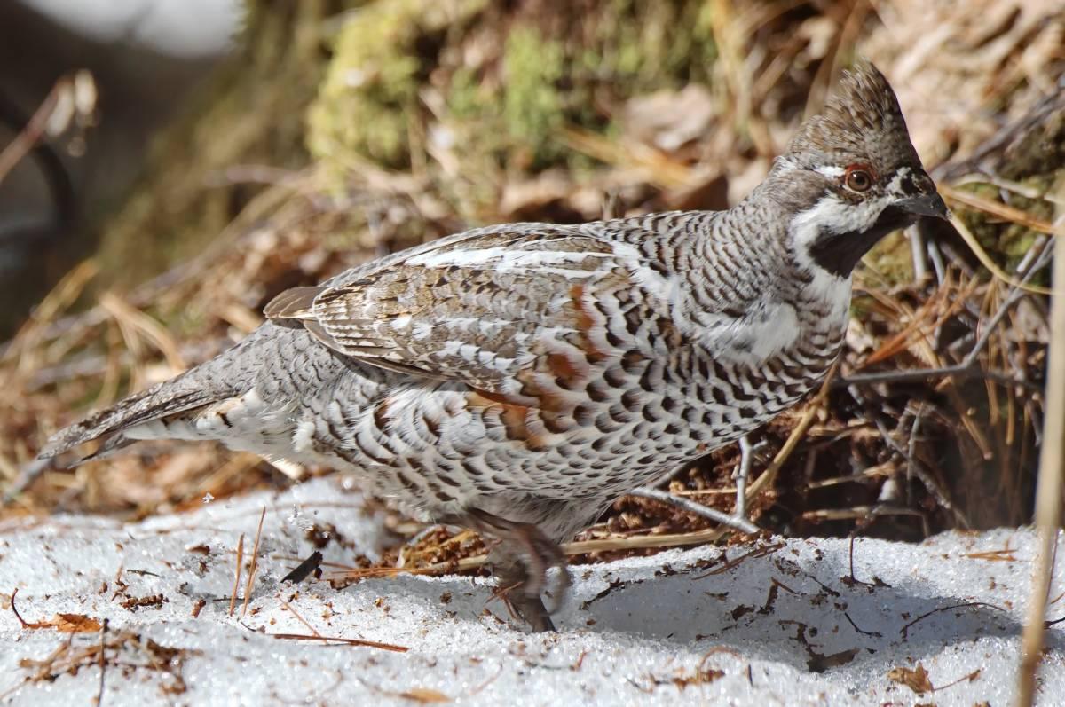Птицы хакасии фото и названия так зарабатывают