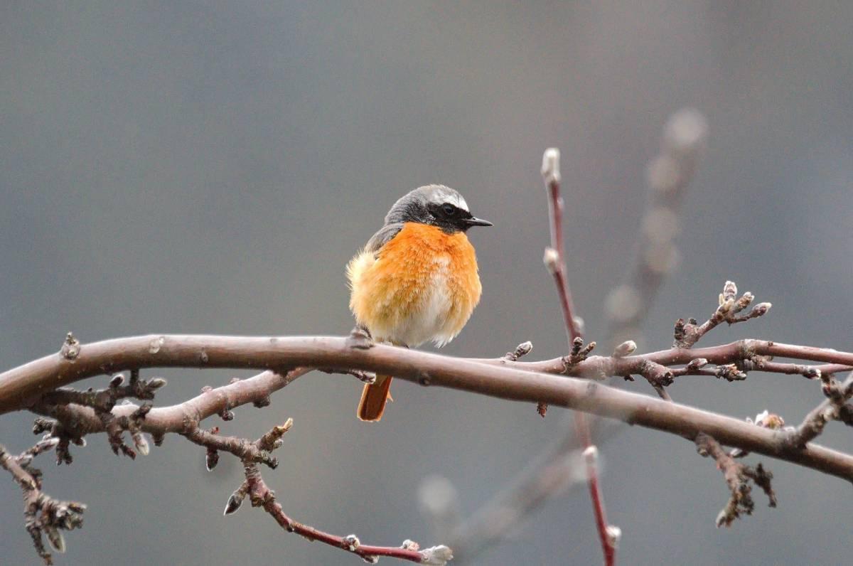 Изображение птиц на фото картинках для гостиной