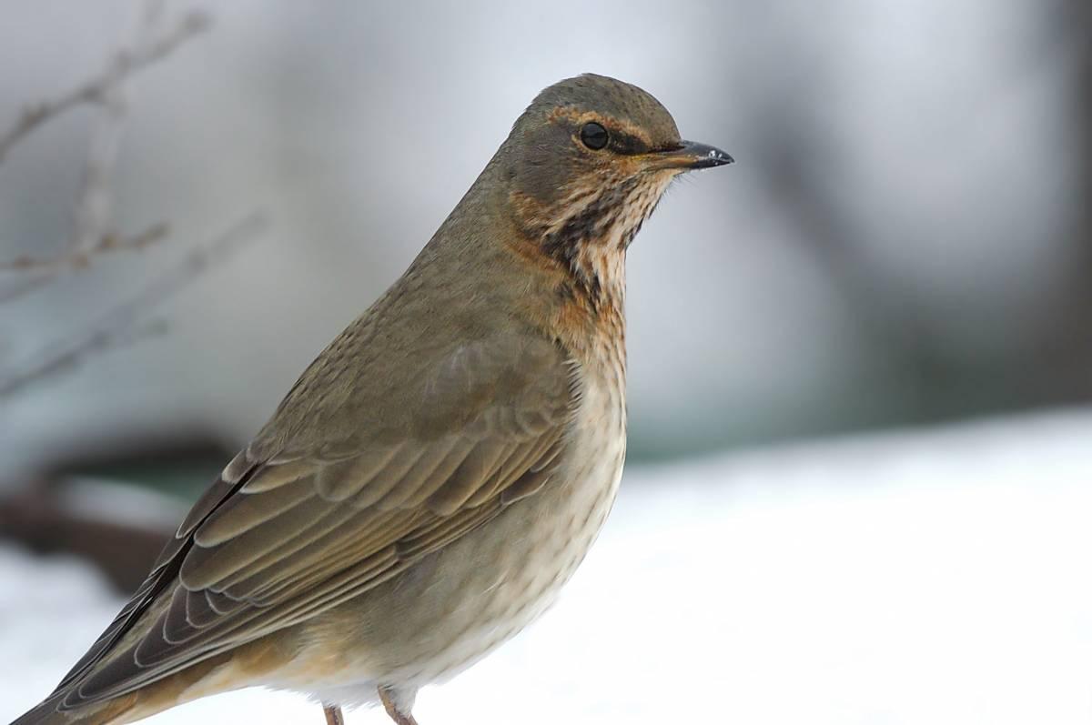 птицы забайкальский край фото жанрами для меня