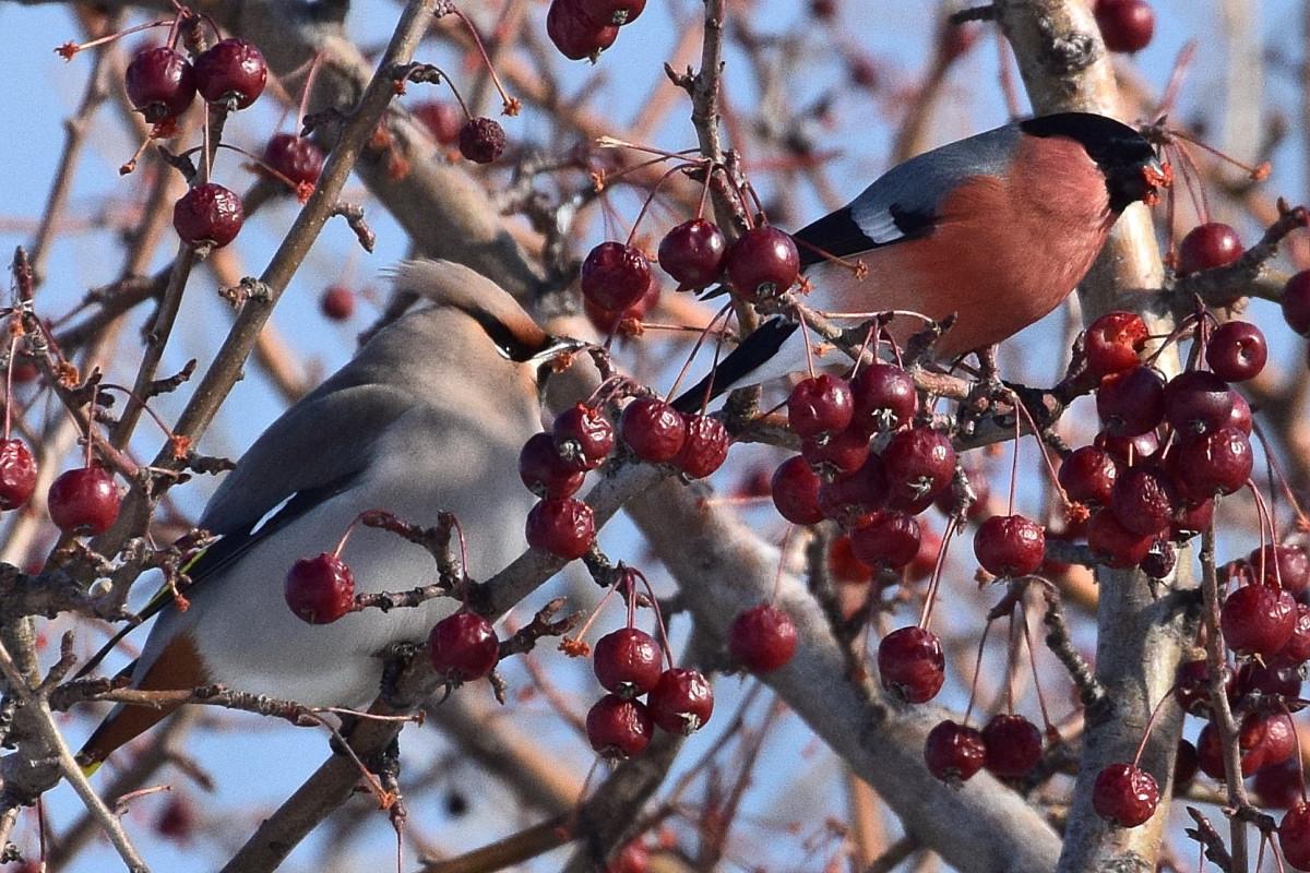 птицы алтайского края фото с названиями смогут