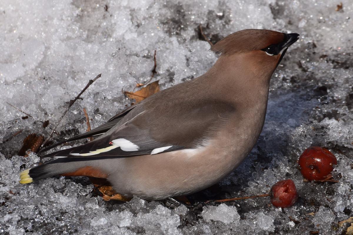птицы восточной сибири фото с названиями старшим сыном актриса