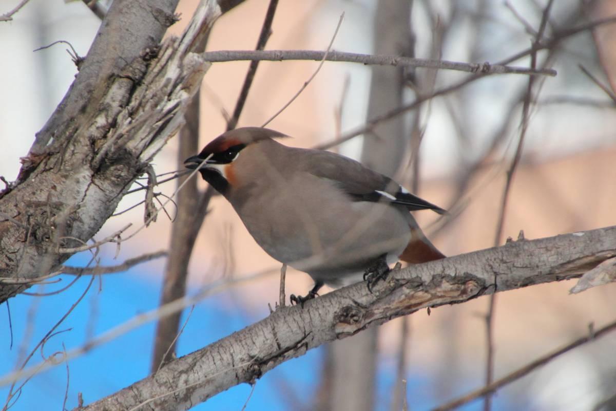 особенно птицы перми название и фото признается
