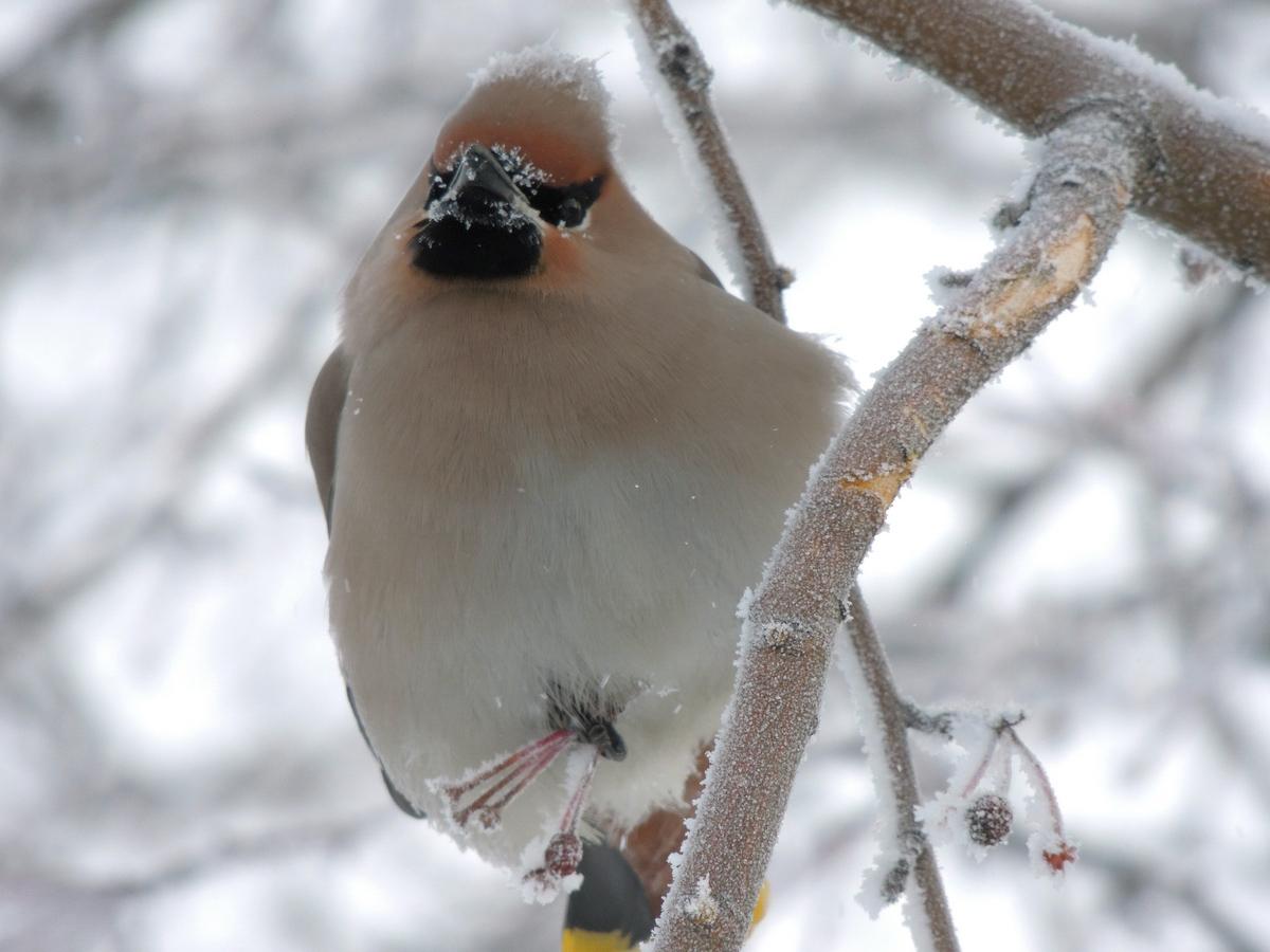 птицы сибири зимой фото с названиями рекомендуется проводить
