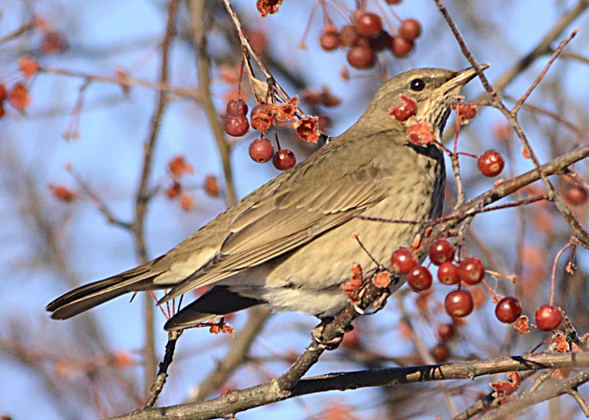фото птиц с названиями в томской области музыкальные композиции