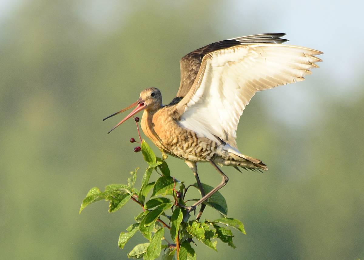 большие птицы россии с фото статус