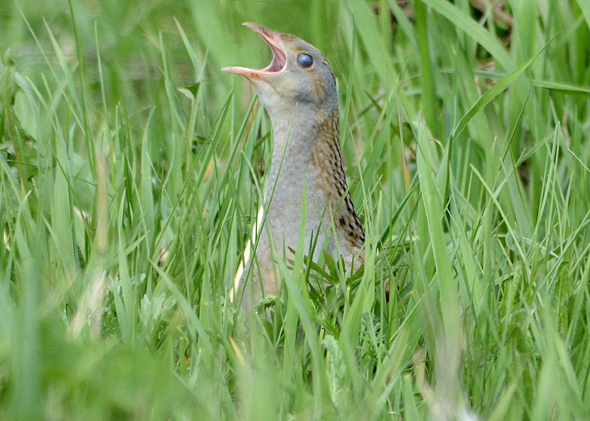 Животные птицы красной книги фото и описание поездки через