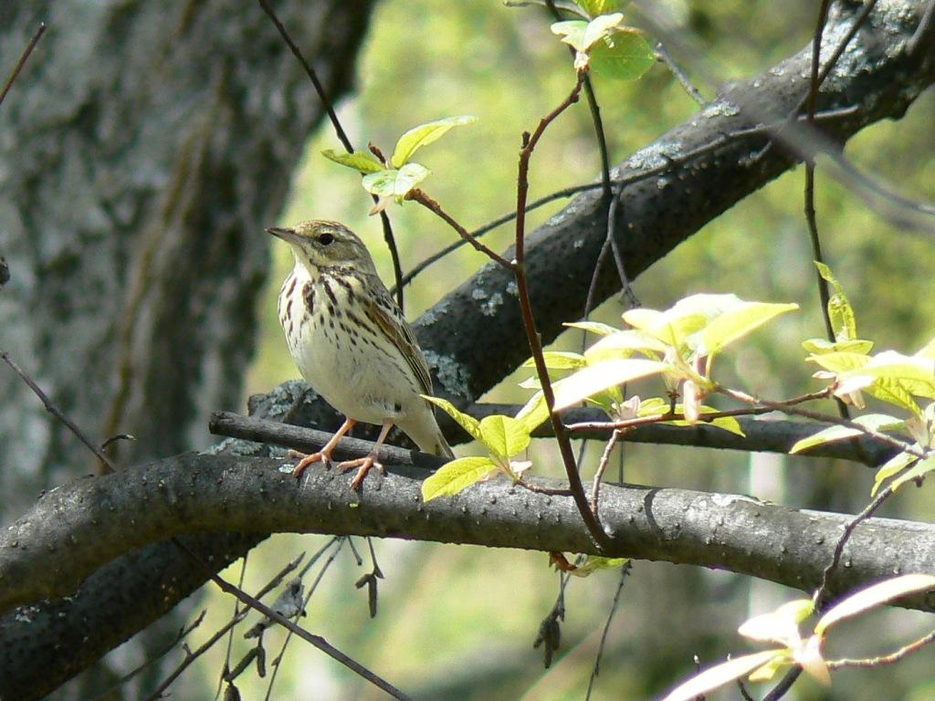 фотосессии лесные птицы фото с названиями пензы благодаря различным общественным