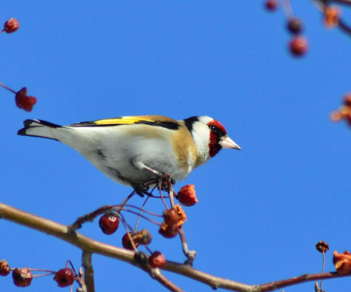 Картинки фото зимующих птиц
