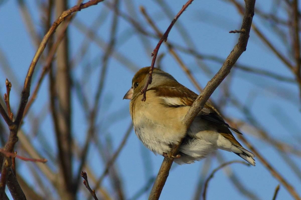 Птицы томской области фото с названиями