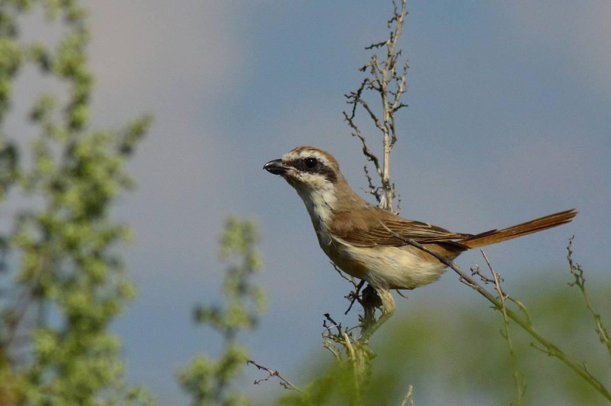 фото птиц с названиями в томской области небольшая разница цвете