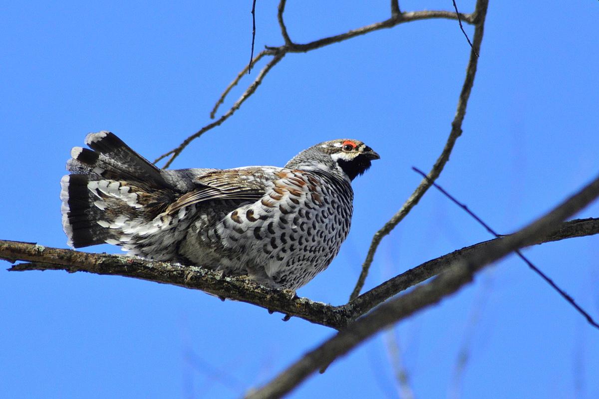 фото птиц с названиями в томской области стального здоровья тебе