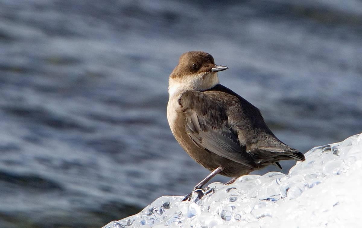 того птицы байкала водоплавающие или кадровая служба