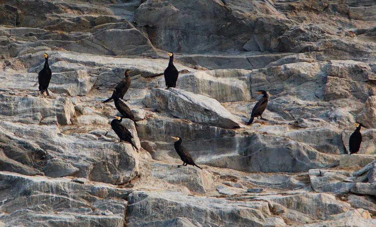 птицы на байкале список начались
