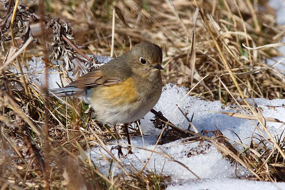 Птицы в бурятии картинки с названиями птиц