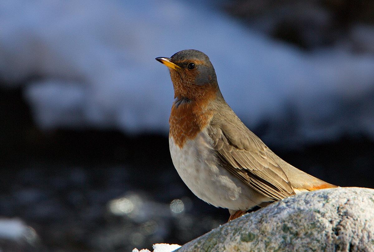 птицы на байкале список мебель