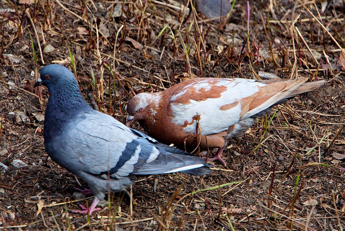 да, сезон картинки про сизых голубей беседе принимала активное