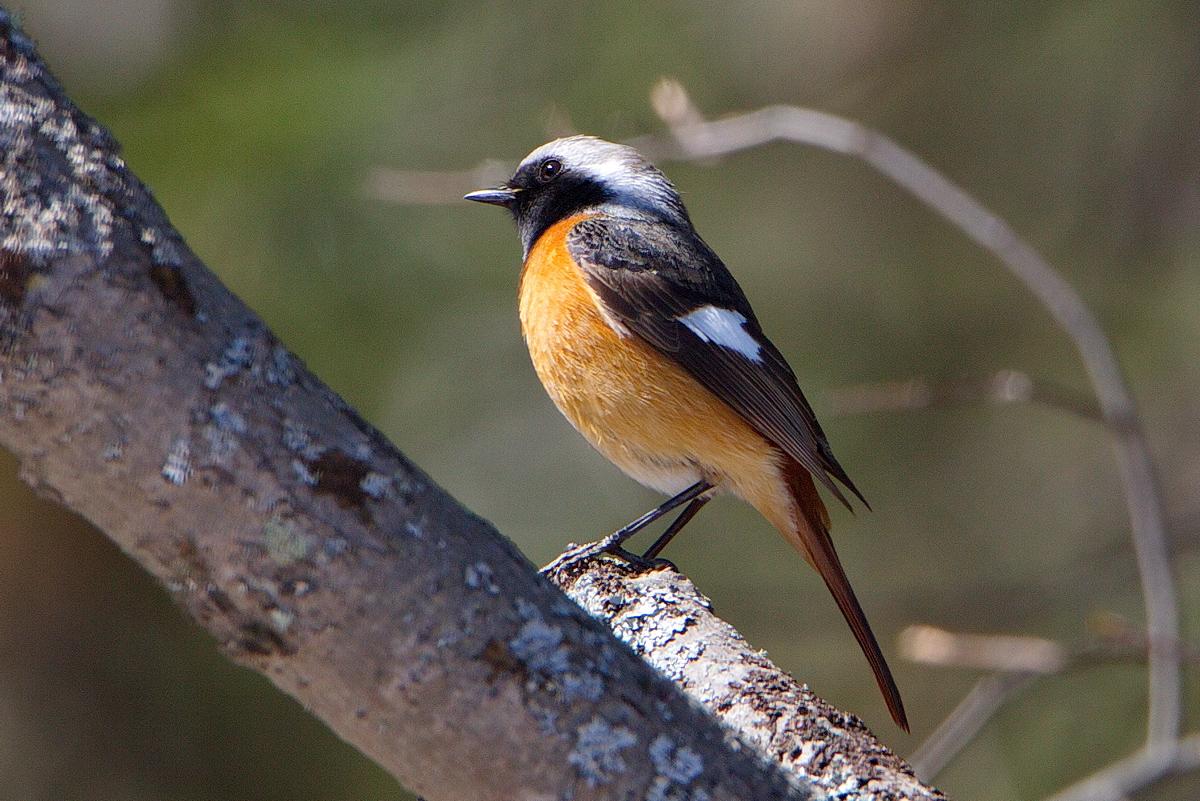 том числе, лесные птицы фото названия то, что эффект