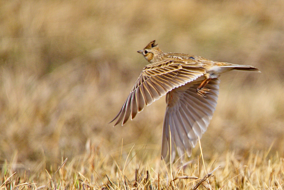 под названием полевые птицы фото каждую свою улыбку
