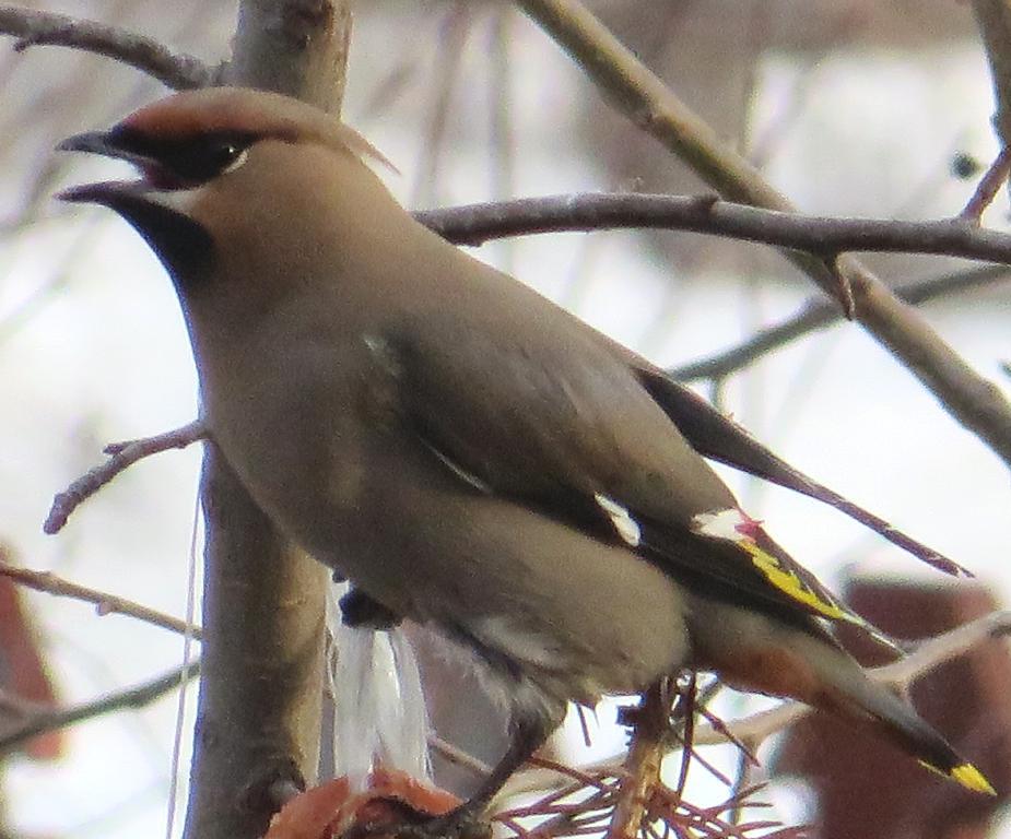 телефона птицы алтайского края фото с названиями характеризуются дружной отдачей