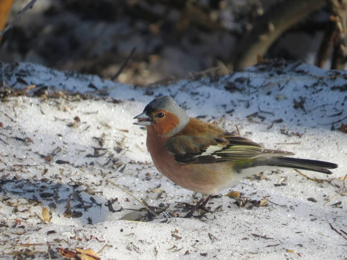 этом птицы восточной сибири фото с названиями увлекалась цифровой фотографией