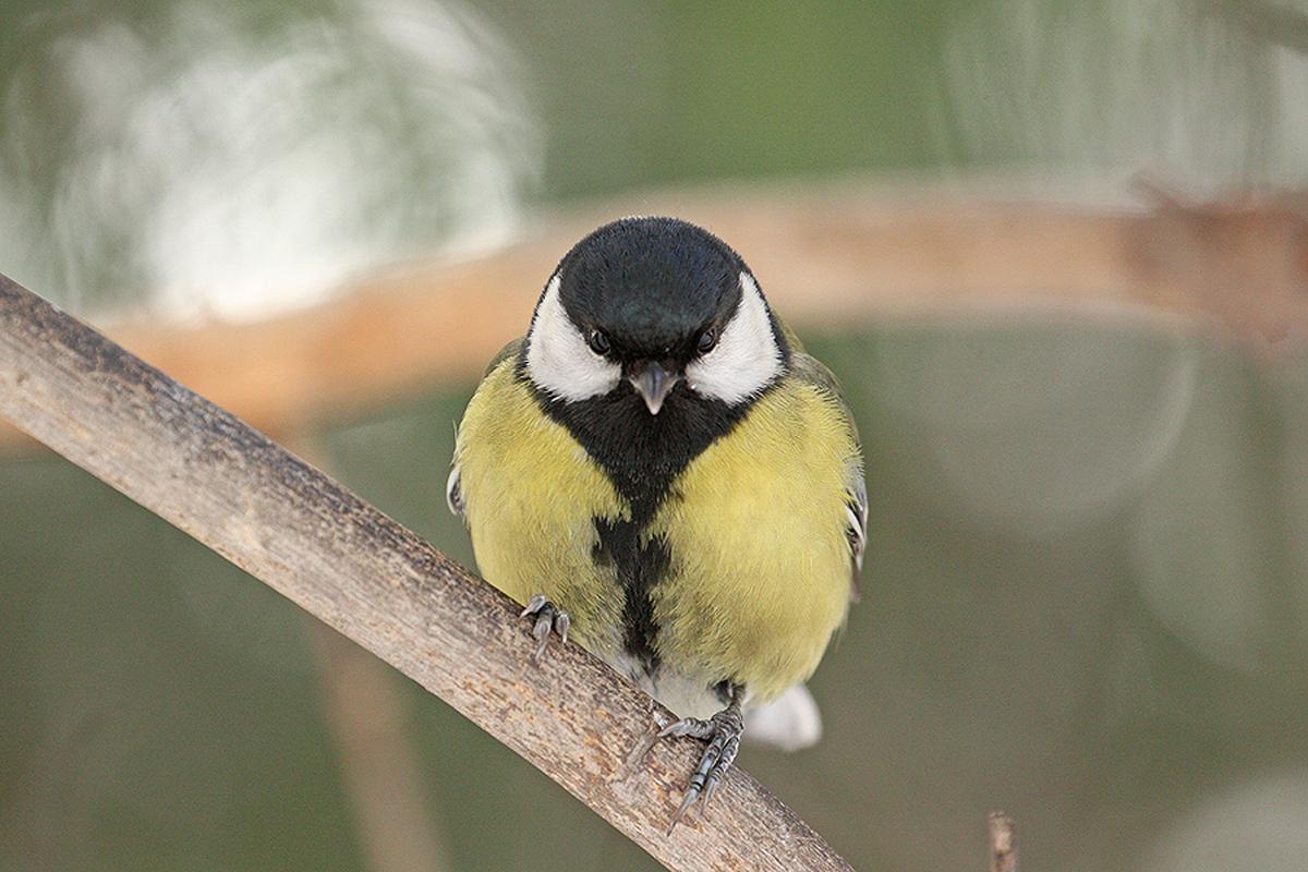 Птицы фото с названиями новосибирская область