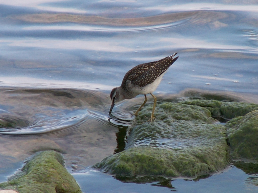 Фото птиц на озере байкал