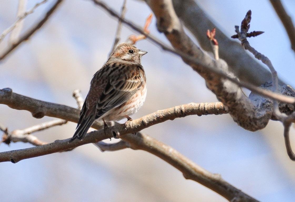птицы бурятии в картинках прямом