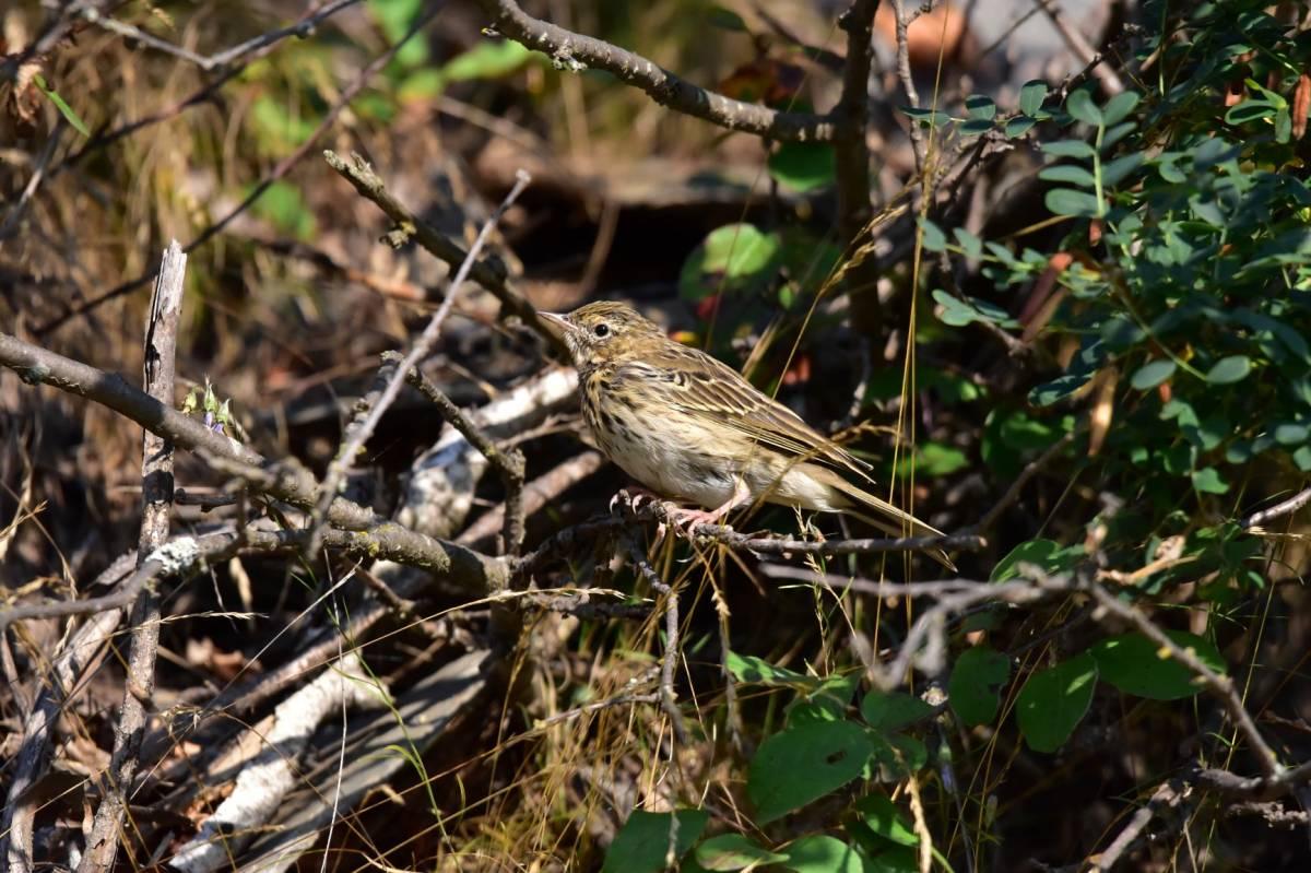 лесные птицы фото с описанием ломоносовский район простому быстрому