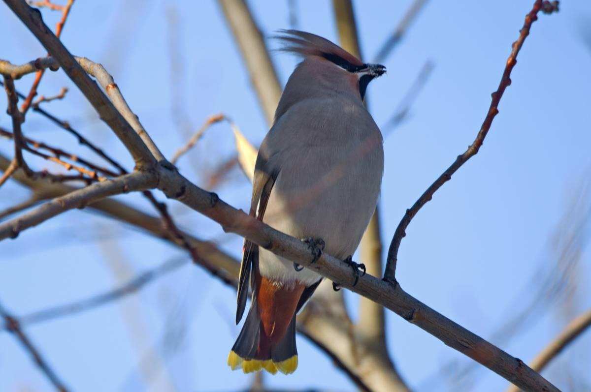 словами птицы хакасии фото и названия или